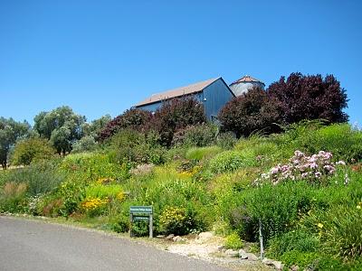 IMG 7695 Di Rosa Preserve Napa, California