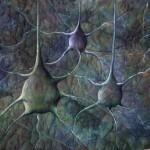 Q+nerve+cells