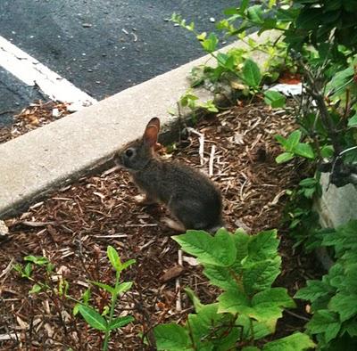 bunny1 An Urban Naturescape