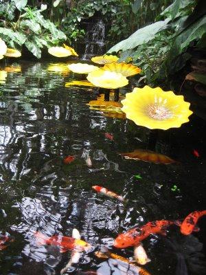 coy+pond Garfield Conservatory