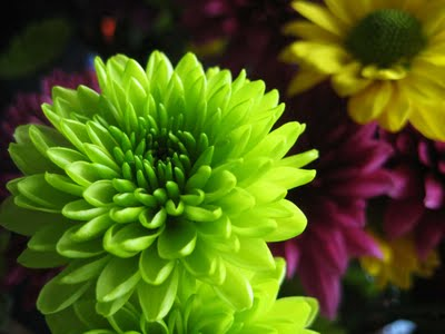 green+flower Seeing color theory in life