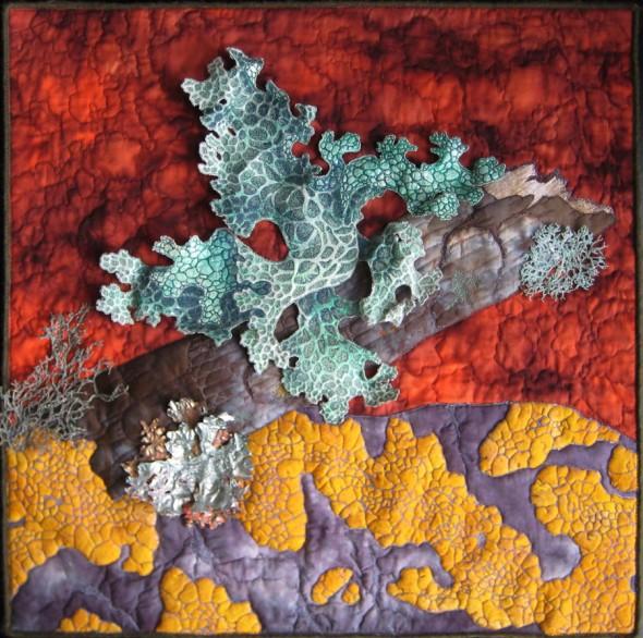 lichen new 590x586 Lichen