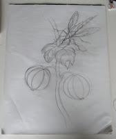plant+sketch plant study