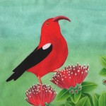 Painting Hawaiian Fauna